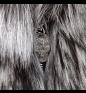 Virsjaka PHILIPP PLEIN Amazing Fur